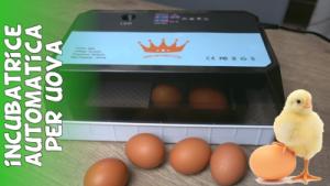 Recensione e test incubatrice automatica economica per uova